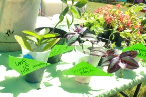 Free Market: Plant Swap 2